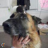 Dog Walker, Pet Sitter in Mundelein