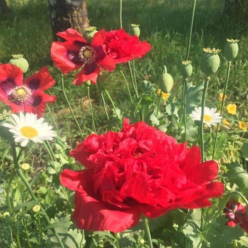 Gardener Provider Marianne Gorda Gallery Image 2