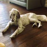 Interviewing Dog Trainer/Sitter