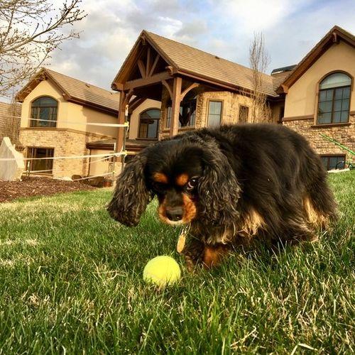 House Sitter Provider Kristan C's Profile Picture