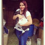 Pet Sitting Offered in Montebello