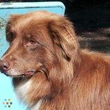 Dog Walker, Pet Sitter in Kanata