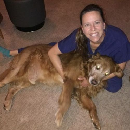 Pet Care Provider Julie T's Profile Picture