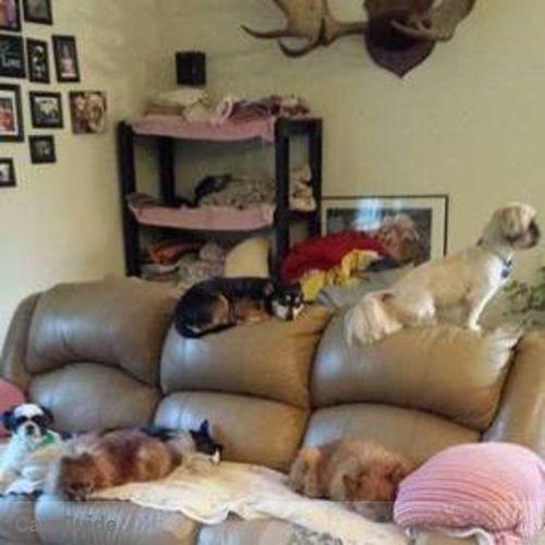 Pet Care Provider Sheri F's Profile Picture