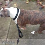 Dog Walker, Pet Sitter in Akron