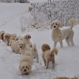Dog Walker, Pet Sitter, Kennel in Fenwick