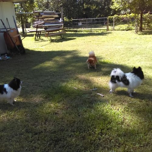 Pet Care Job Jennifer Lindow's Profile Picture