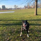Dog Walker Job, Pet Sitter Job in Manhattan