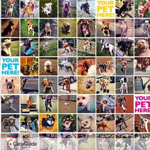 Pet Care Provider Jesse M's Profile Picture