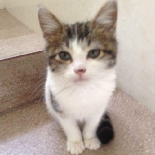 Pet Care Provider Mildred R's Profile Picture