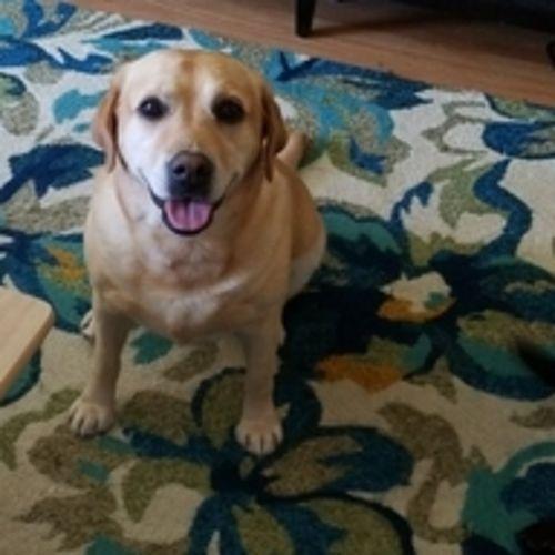 Pet Care Provider Lindsey W's Profile Picture
