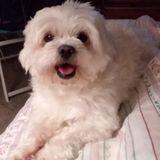 Animal Caregiver in Milton