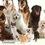Dog Walker, Pet Sitter, Kennel in Quincy