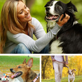 Affordable & Reliable Dog Walking/Sitting Service