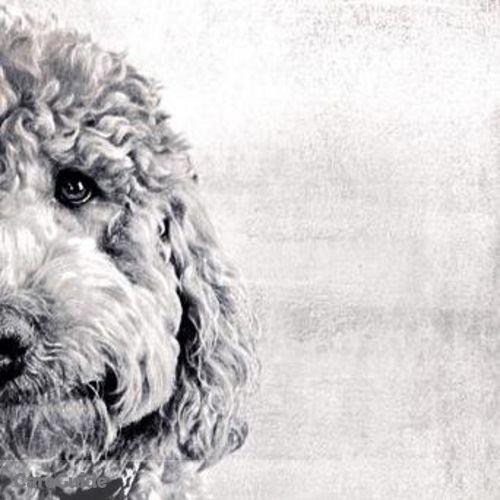 Pet Care Provider Suzanne P's Profile Picture