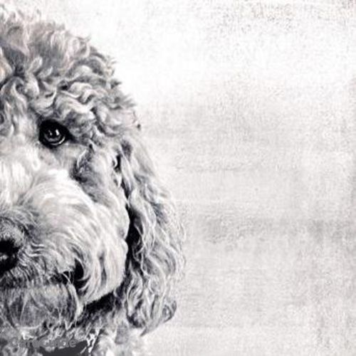 Pet Care Provider Suzanne Polombo's Profile Picture