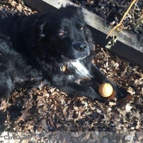 Pet Care Provider Oya D's Profile Picture