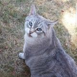 I am Izabella, and I am looking forward to spending time with your pets!