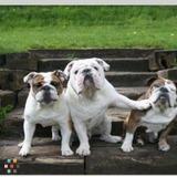 Dog Walker, Pet Sitter in Rohnert Park