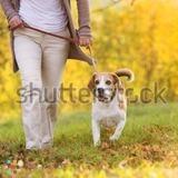 Dog Walker in Strathroy