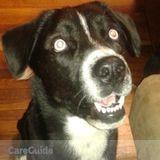 Dog Walker, Pet Sitter in Independence