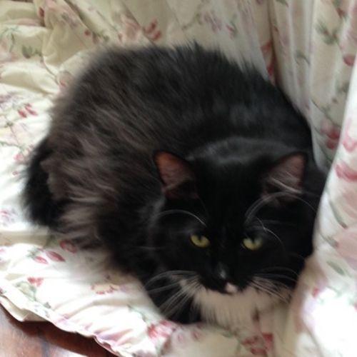 Pet Care Job Claire Kruszka's Profile Picture