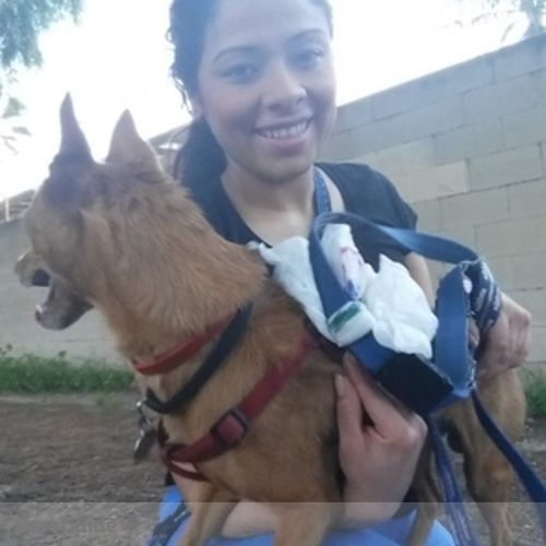 Pet Care Provider Glendy Salazar's Profile Picture