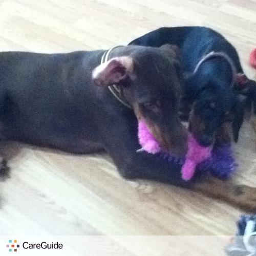 Pet Care Provider Karl I's Profile Picture