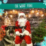 Miramichi, New Brunswick Dog Walker Posting