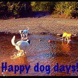 Dog Walker, Pet Sitter in Anchorage