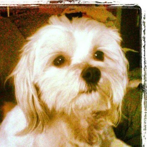 Pet Care Provider Katie C Gallery Image 2
