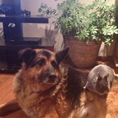 Pet Care Provider Ashley Janssen's Profile Picture