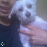 Dog Walker, Pet Sitter in Springfield