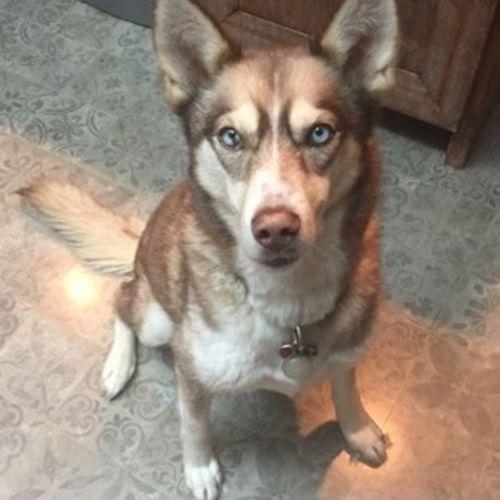 Pet Care Job Courtney D's Profile Picture