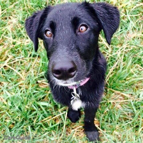 Pet Care Provider Toni Hayes's Profile Picture