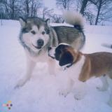 Dog Walker in Hanover