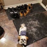 Caring Pet Sitter for Your Home or Walking any Pets you Need
