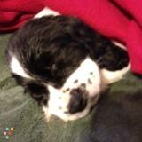 Dog Walker, Pet Sitter in Bella Vista