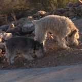 Pet Sitter Job in Tucson