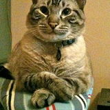 Loving Pet sitter Available. I love cats!