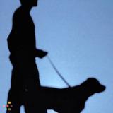 Dog Walker in Hobe Sound