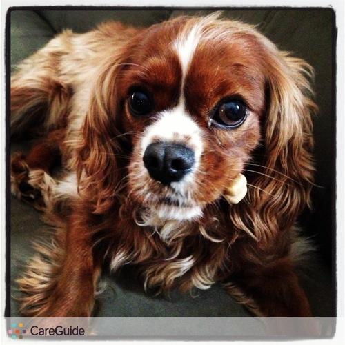 Pet Care Provider Ashley Edel's Profile Picture