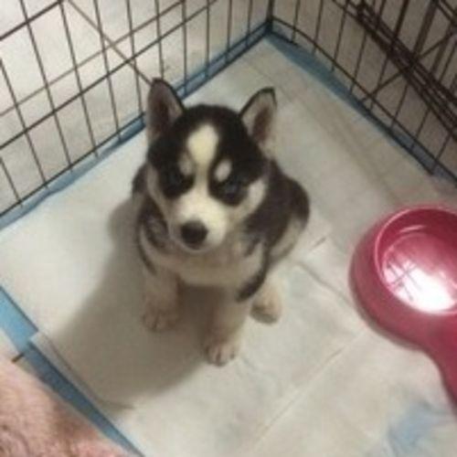Pet Care Job Jacky Reyes Gallery Image 1
