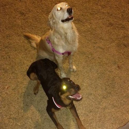 Pet Care Provider Alena Mahaffey Gallery Image 1