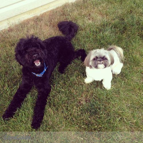 Pet Care Job Ashley Burgoyne's Profile Picture