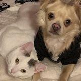 Excellent pet care