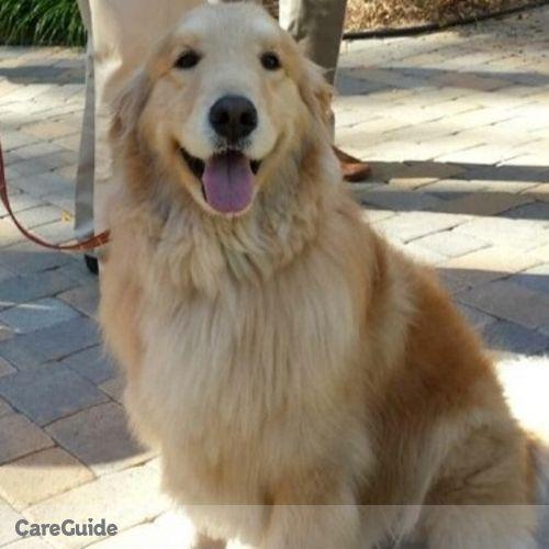 Pet Care Job Dolores Schriever's Profile Picture