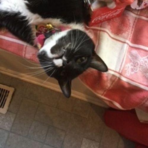 Pet Care Provider Christine Emerick's Profile Picture