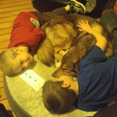 Pet Care Provider Andi Whitehead Gallery Image 1