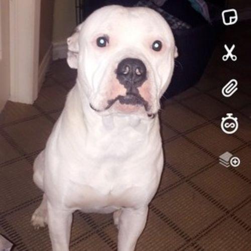 Pet Care Provider Faith N's Profile Picture